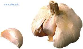 garlic tibet.